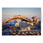Osos polares que limpian en una ballena de bowhead tarjeta