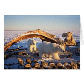 Osos polares que limpian en una ballena de bowhead tarjeta de felicitación