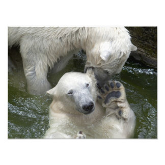 Osos polares que luchan fotografías