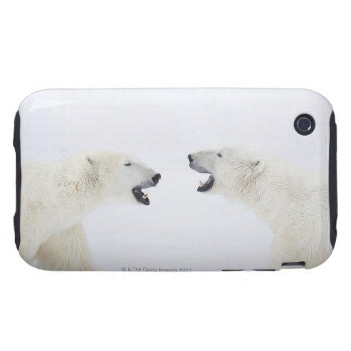 Osos polares que se colocan en nieve después de ju tough iPhone 3 cárcasa