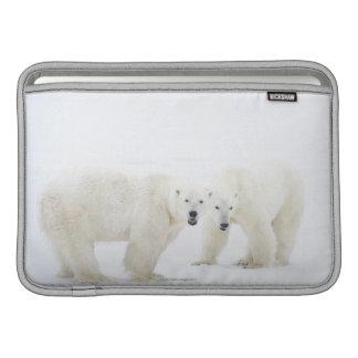 Osos polares que se colocan en nieve después de ju funda  MacBook