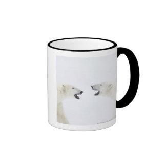 Osos polares que se colocan en nieve después de ju taza