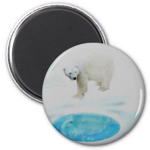 Osos polares solamente imán