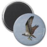 Osprey 2 Inch Round Magnet