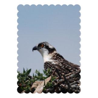 osprey-35.jpg 5x7 paper invitation card