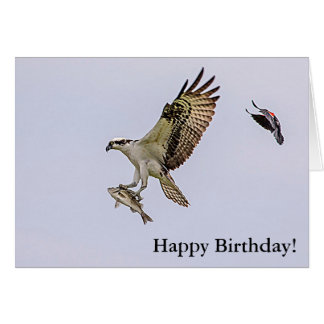Osprey being chased by a red winged blackbird card