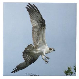 Osprey bird flying Tile
