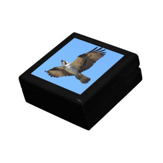 Osprey Bird Gift Box
