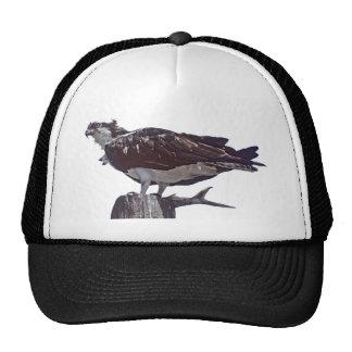 Osprey Bird Mesh Hat