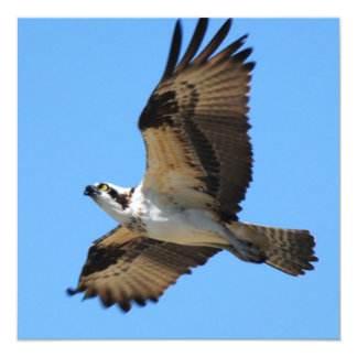 "Osprey Bird Invitations 5.25"" Square Invitation Card"