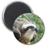 Osprey Bird Magnets