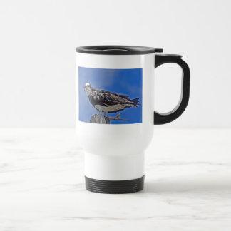 Osprey Bird Mugs