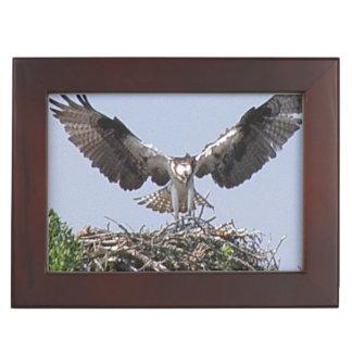 Osprey Bird Keepsake Boxes