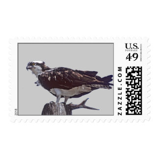 Osprey Bird Postage Stamp