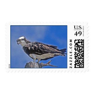 Osprey Bird Stamps
