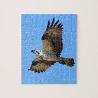 Osprey Bird Puzzle