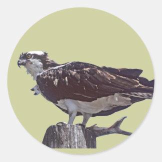 Osprey Bird Sticker