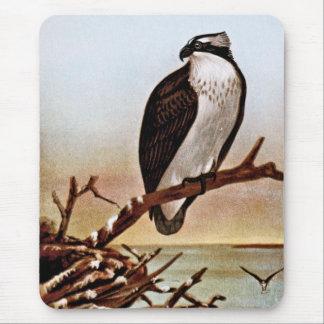 Osprey Bird Vintage Art Mouse Pad