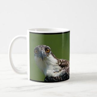 Osprey chick 2 coffee mug