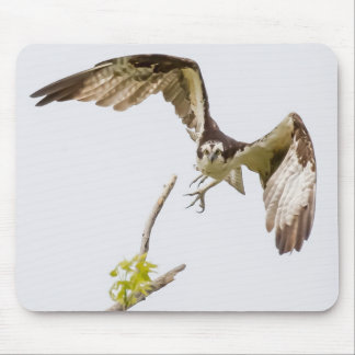 Osprey Coming At You Mouse Pad
