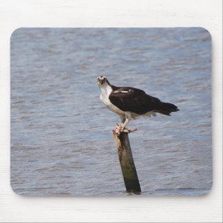 Osprey con el mousepad de los pescados tapete de ratón
