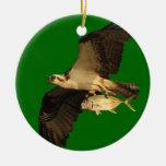 osprey con el regalo adornos de navidad