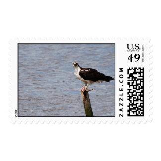 Osprey con franqueo de los pescados sellos