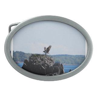 Osprey en jerarquía hebillas cinturon ovales