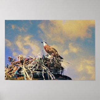 Osprey en la jerarquía impresiones