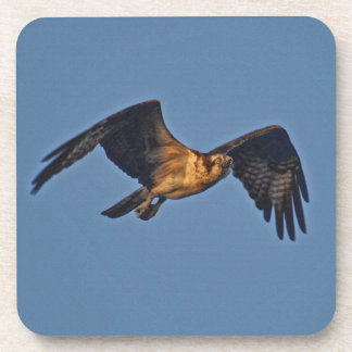 Osprey Fish Eagle Flying at Sunset Drink Coaster