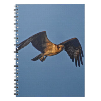 Osprey Fish Eagle Flying at Sunset Spiral Note Books