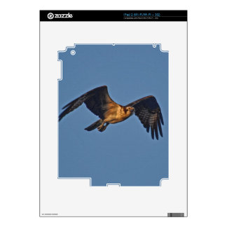 Osprey Fish Eagle Flying at Sunset Skins For The iPad 2