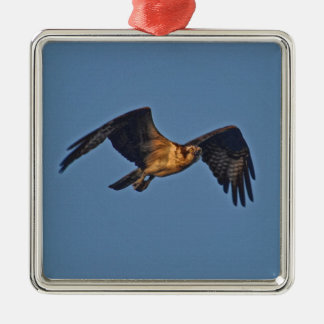 Osprey Fish Eagle Flying at Sunset Square Metal Christmas Ornament