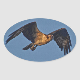 Osprey Fish Eagle Flying at Sunset Stickers