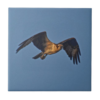 Osprey Fish Eagle Flying at Sunset Tile