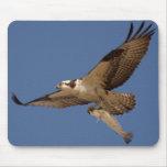 Osprey Fisher Tapetes De Ratón