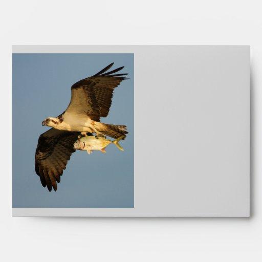 osprey fishing envelope