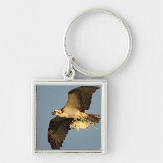 osprey fishing keychains