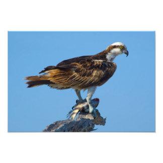 Osprey, Florida Photo Print