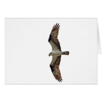 Osprey Flying Photo Greeting Card