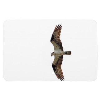 Osprey Flying Photo Rectangular Magnets