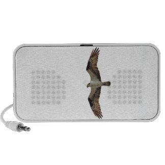 Osprey Flying Photo Speaker System