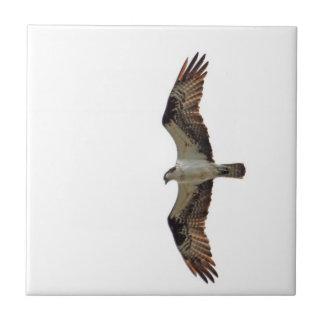 Osprey Flying Photo Ceramic Tile