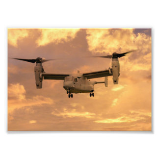 Osprey Fotografía