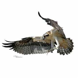 Osprey hawk Photo Sculpture