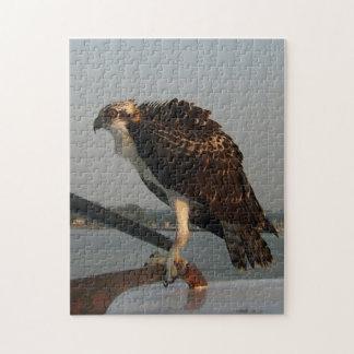 Osprey Hawk Jigsaw Puzzles