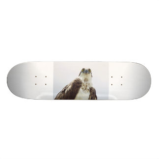 Osprey Hawk Skateboard