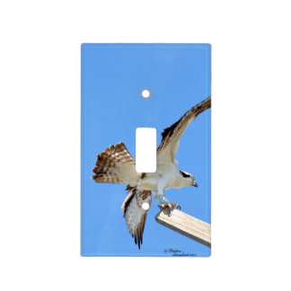 Osprey Hawk stretching wings Switch Cover