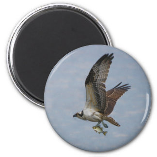 Osprey Imán Redondo 5 Cm