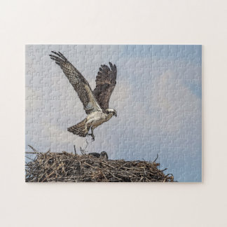 Osprey in a nest jigsaw puzzle